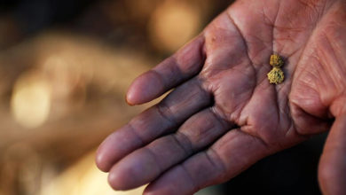 Об открытии россыпного золота на Северном Урале