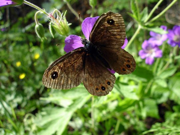 Усть-Калья – Маслово: природа, хозяйство, люди