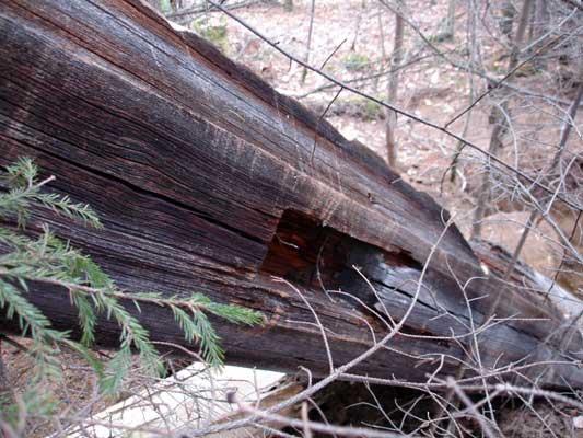 Остатки конного ворота. Шахта №5 Серебрянского рудника