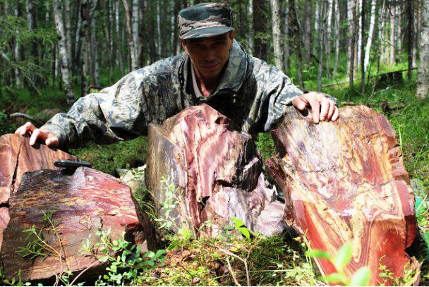 Развалы яшм, найденные нашей командой на горе Ваниловка