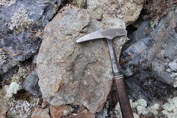 Кристаллы метаморфических минералов в сланце.